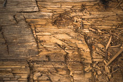 Chopped Wooden Plank Texture Stock Images