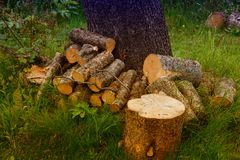 Chopped woods. A tree chopped into pieces for firewood Royalty Free Stock Images