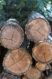Choppeed wood Royalty Free Stock Photography