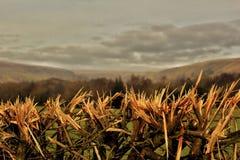 Choppes buske skyscape Arkivfoton