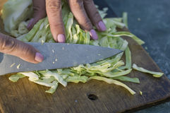 Chopping Cabbage Stock Image