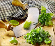 Chopping fresh basil Royalty Free Stock Photography
