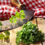 Chopping parsley Stock Photos