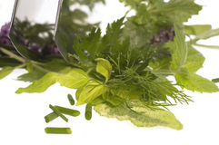 Chopping fresh herbs. Royalty Free Stock Photography