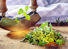 Chopping fresh marjoram Royalty Free Stock Image