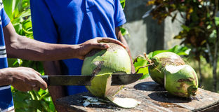 Chopping Green Coconuts Royalty Free Stock Photos