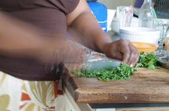 Chopping herbs Stock Image