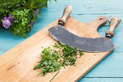 Chopping herbs Stock Images