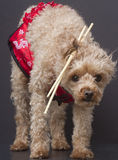 Chopstick Cutie zdjęcie royalty free