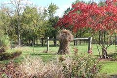 Choque da forragem pelas madeiras no outono Fotografia de Stock Royalty Free