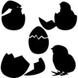 Choque da galinha. silhueta Imagens de Stock Royalty Free