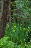 chorągwiany podeszczowej wody kolor żółty Zdjęcie Royalty Free