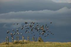Chor der Vögel, die von einem Zaun in der Wiese fliegen stockbilder