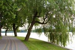 Chorando a árvore de salgueiro ao lado do lago, Fotografia de Stock Royalty Free