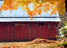 Chores for Autumn Afternoon. Bright yellow leaves frame wooden red barn.  A large pile of leaves stand raked and ready for burning.  A variety of garden tools Stock Images