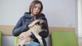 Choroba psi mops z bandażującą łapą w linii przy weterynaryjną kliniką Dziewczyna trzyma chorego psa w ona ręki zbiory wideo