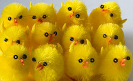 Chorus of Easter chickens Stock Photo