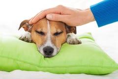Chory bolączka pies Zdjęcie Stock