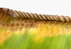 chory liść Zdjęcie Stock