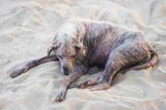 Chory przybłąkany pies obraz royalty free