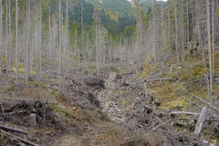 Chorzy drzewa Fotografia Royalty Free