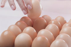The chosen egg. Hand picking one of many hen eggs Royalty Free Stock Images