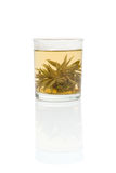 Chosen green tea. In the transparent glass with mirror isolated over white Royalty Free Stock Images