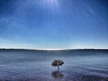 The chosen one. Small tree growing in blue ocean waters with rays of sunlight and reflections in water Royalty Free Stock Photo