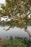 Chosin alberi piani centrali Fotografia Stock Libera da Diritti