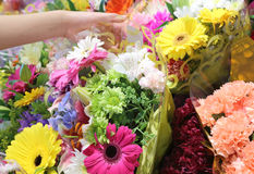 Chossing bouquet flowers Royalty Free Stock Photography