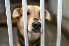 Choszczno, Polen, am 12. November 2017: Hund hinter Gittern im Schutz Stockbild