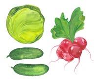 Chou, concombre et radis Image libre de droits