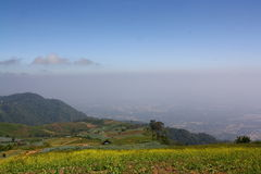 Chou de champ en montagne Photographie stock libre de droits