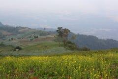 Chou de champ en montagne Image stock