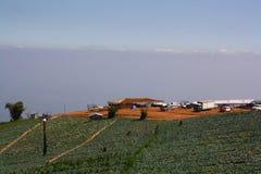 Chou de champ en montagne Images libres de droits