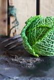 Chou de Milan, sol, fourchette de jardin, marqueur de rangée sur le fond de barrière Images stock