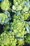 Chou de Romanesco Images stock
