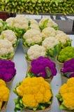 Chou-fleur coloré (brassica oleracea) photographie stock libre de droits