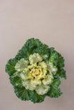 Chou-fleur décoratif Photographie stock