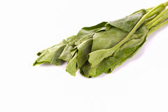 Chou frisé vert sur le fond blanc Photos stock