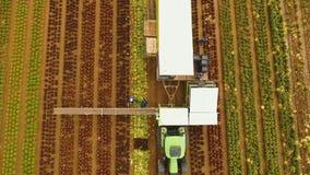 Chou moissonnant par le tracteur Champ avec des rangées de salade Images libres de droits
