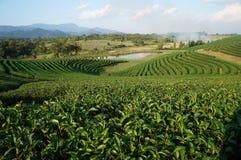 Choui Fong Tea Co Stock Fotografie