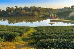 Choui Fong Tea lantgård Arkivbilder