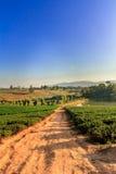 Choui Fong Tea lantgård Royaltyfri Foto