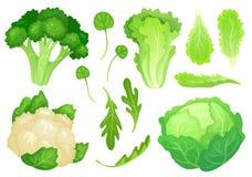 Choux de bande dessinée Feuilles fraîches de laitue, salade végétarienne de régime et chou commun de jardin sain Vecteur principa illustration libre de droits