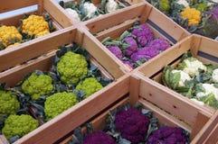 Choux-fleurs de couleurs. Images stock