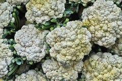 Choux-fleurs frais mûrs Photographie stock libre de droits