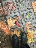 Chova, as folhas de outono e a pimenta de pimentão no passeio Imagens de Stock Royalty Free
