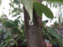 Chova, esverdeie, deixe cair, natureza, folha, orvalho, água, gotas, fim, acima de, as folhas, planta, brilhante, brilhante, líqu Foto de Stock