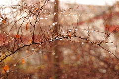 Chova gotas Fotos de Stock